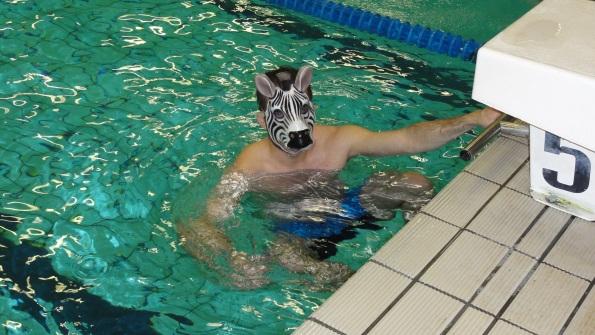 Zebre à l'eau