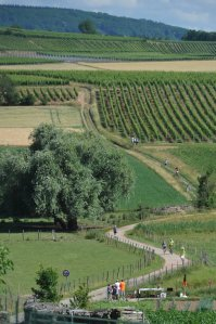 10e-marathon-du-vignoble-photo-dna-marc-rollmann